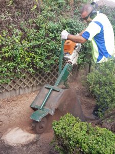 Tree removal North shore, tree services northern beaches