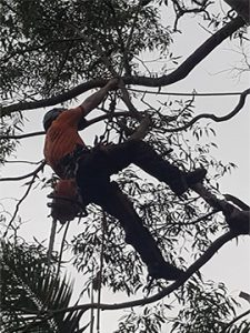 Tree removal Clontarf, tree pruning services Clontarf