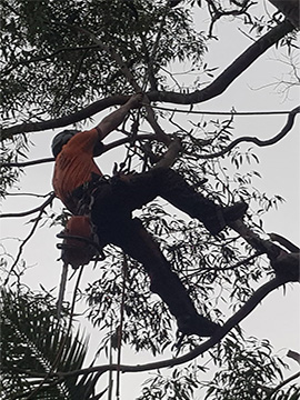 Best northern beaches tree pruning service