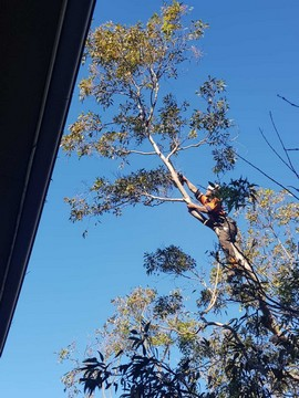 cheapest northern beaches Arboriculture Maintenance service