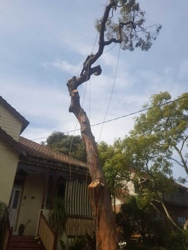 Affordable and best northern beaches Dead Wooding and Tree Felling service
