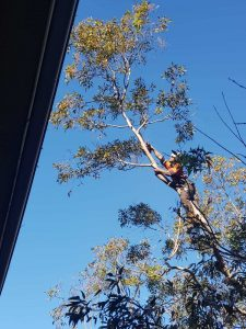 Tree Removal Services Morning Bay
