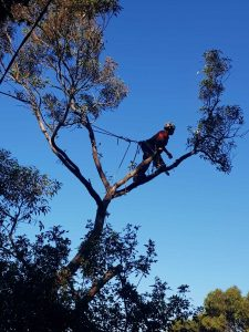 Linley Point Tree Removal Services